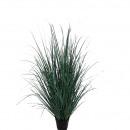 Barley Millet